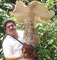 hongo-gigante-1.jpg