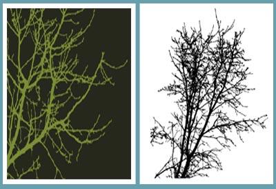 siluetas-arboles-vectores.jpg