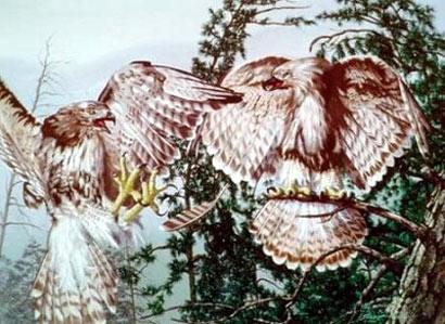 Rostro de viejo formado por alas de águila