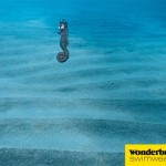 Wonderbra, usando al caballito de mar sorprendido