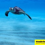 Wonderbra, utilizando a la tortuga marina sorprendida