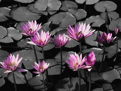 Imagen generada con Tint Photo Editor