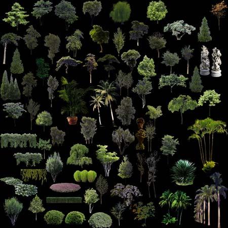 arbolesyplantas
