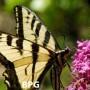 BPG vs JPG (foto de mariposa) un acercamiento interesante