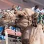 BPG vs JPG (foto de camello), comparación de calidades